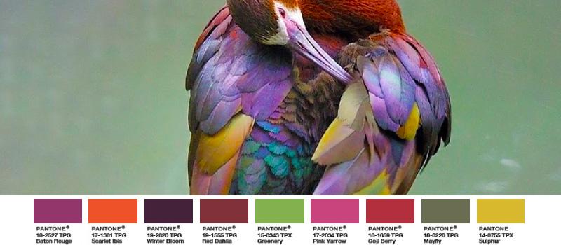 Brillensichler exotischer Vogel Greenery Palette