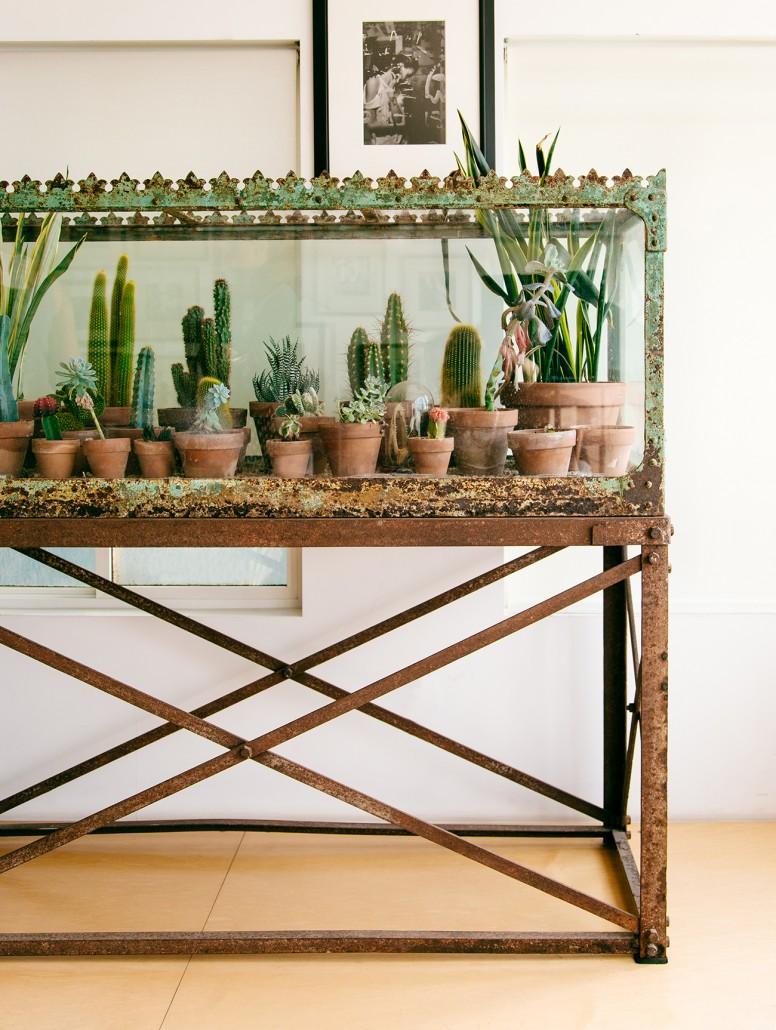 Urban Jungle Kaktus Terrarium