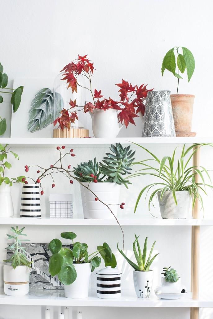Plantshelfie Pflanzenregal