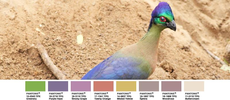 Glanzhaubenturako exotischer Vogel Greenery Palette