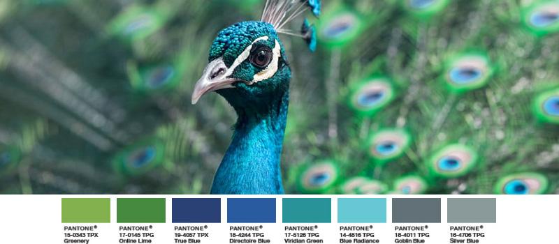 blauer Pfau exotischer Vogel schimmernd bunt greenery palette