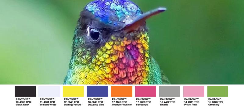 Feuerkehlkolibri exotischer Vogel schimmernd bunt greenery palette