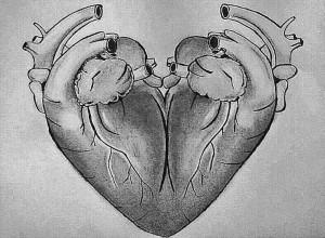 zeichnung herz Organ Herzsymbol